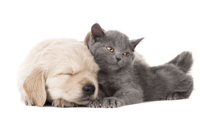 A puppy and a kitten are happy and healthy at Champions Forest Animal Clinic in Houston, Texas