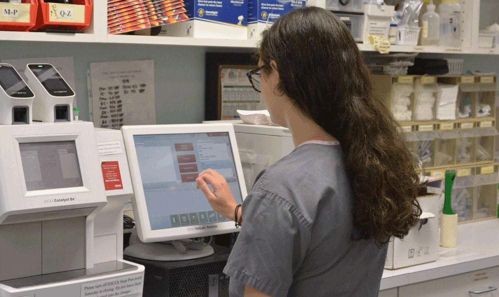 Lab at Hidden Valley Animal Hospital & Boarding
