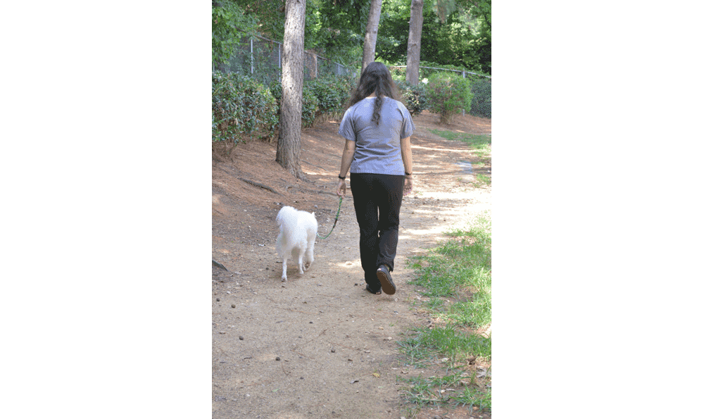 Back Yard At Hidden Valley Animal Hospital & Boarding