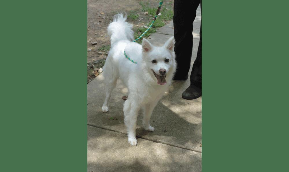 Lyric the dog at Hidden Valley Animal Hospital & Boarding