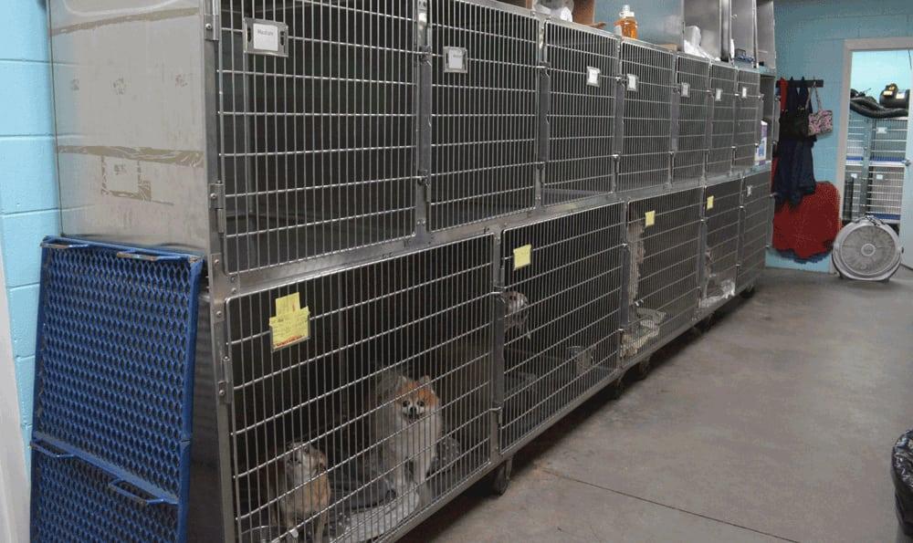 Dog boarding at Hidden Valley Animal Hospital & Boarding