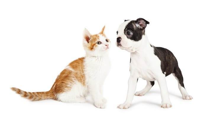 A kitten and a puppy are happy and healthy at Red Mountain Animal Hospital in Mesa, Arizona