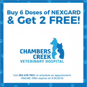 coupon for Chambers Creek Veterinary Hospital