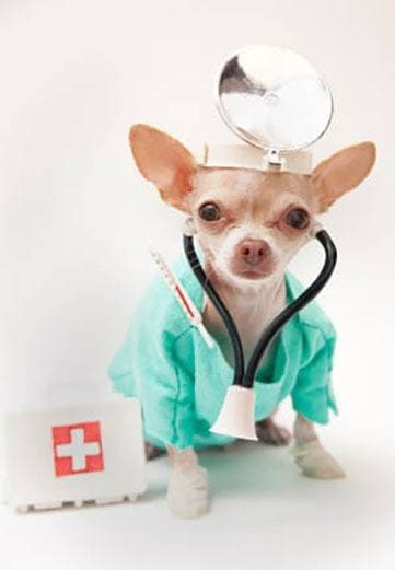 Puppy dressed as a doctor at Willow Run Veterinary Clinic in Willow Street, Pennsylvania