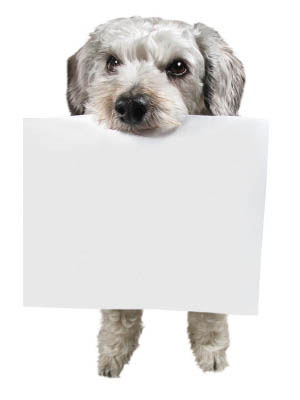 A doggie with a document at Angeles Clinic For Animals in Port Angeles, Washington