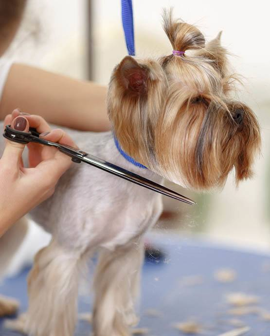 Dog receiving grooming services at The Animal Hospital on the Golden Strip in Williamsport, Pennsylvania