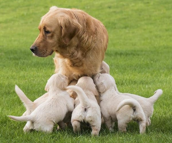 Mother dog with puppies at The Animal Hospital on the Golden Strip in Williamsport, Pennsylvania
