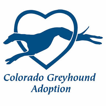 Colorado greyhound adoption at Black Forest Veterinary Clinic in Colorado Springs, Colorado