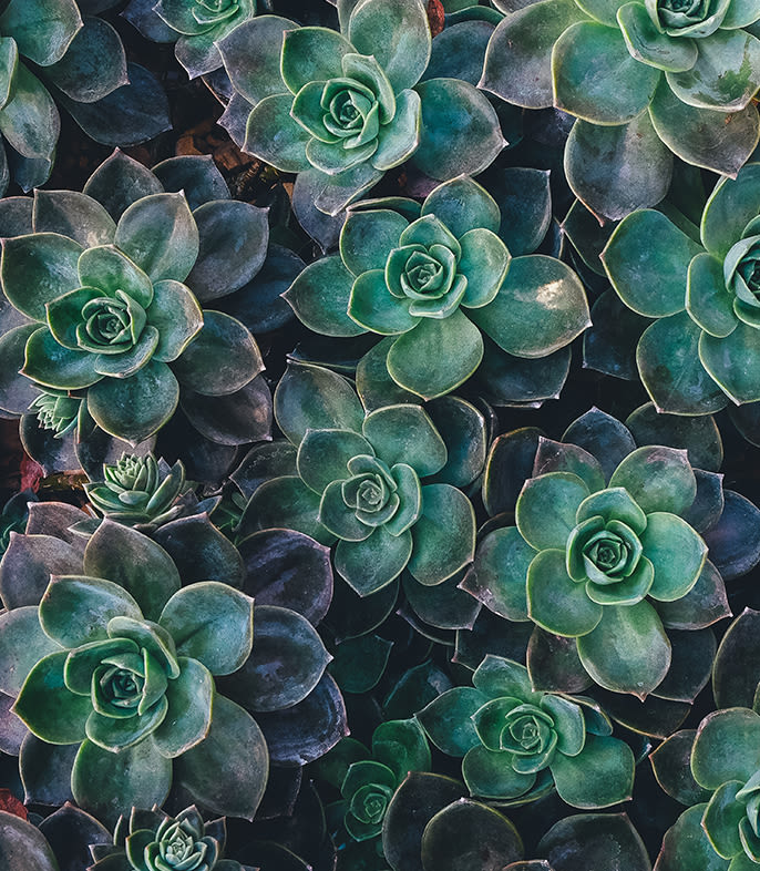 Succulents at The Copeland in Austin, Texas