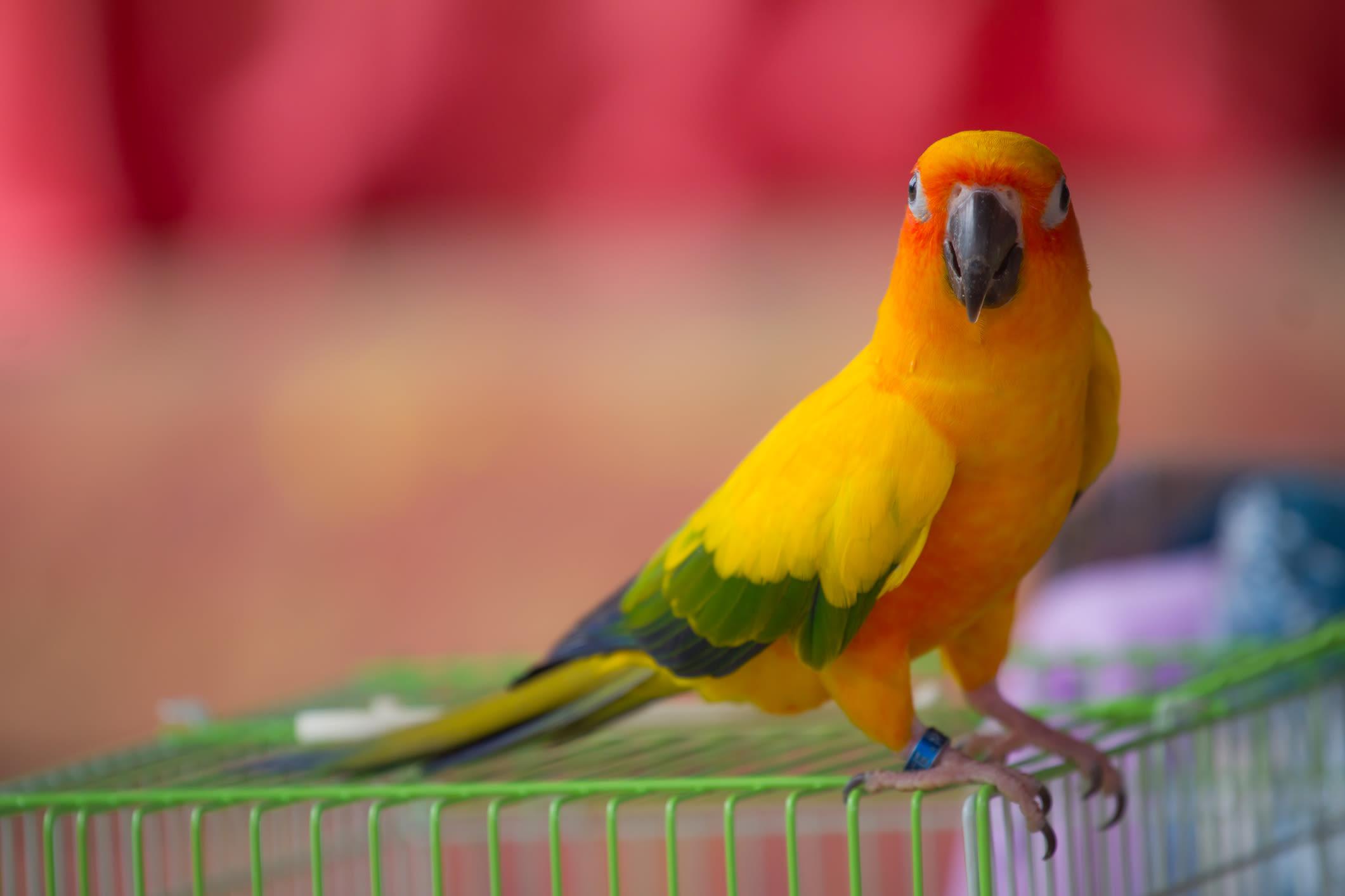 Beautiful color bird at Black Forest Veterinary Clinic in Colorado Springs, Colorado