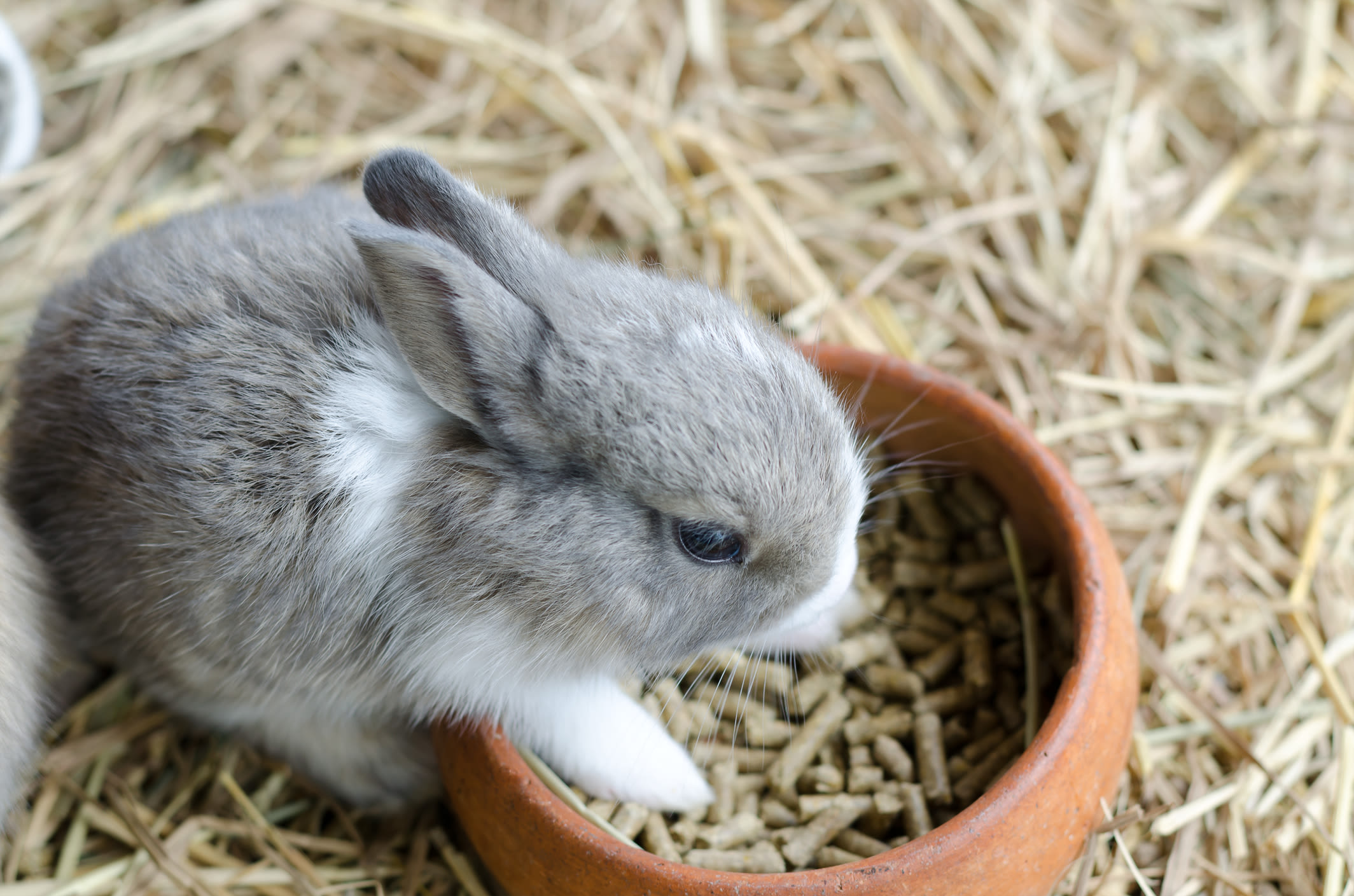Rabbit eating at Black Forest Veterinary Clinic in Colorado Springs, Colorado