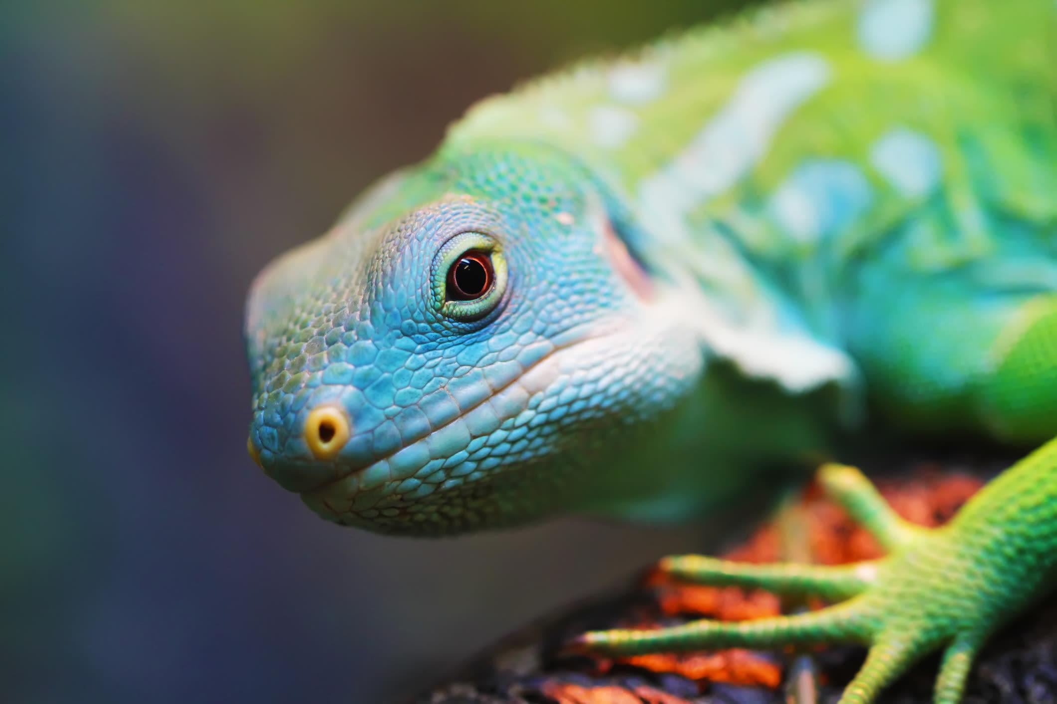 Exotic reptile at Black Forest Veterinary Clinic in Colorado Springs, Colorado