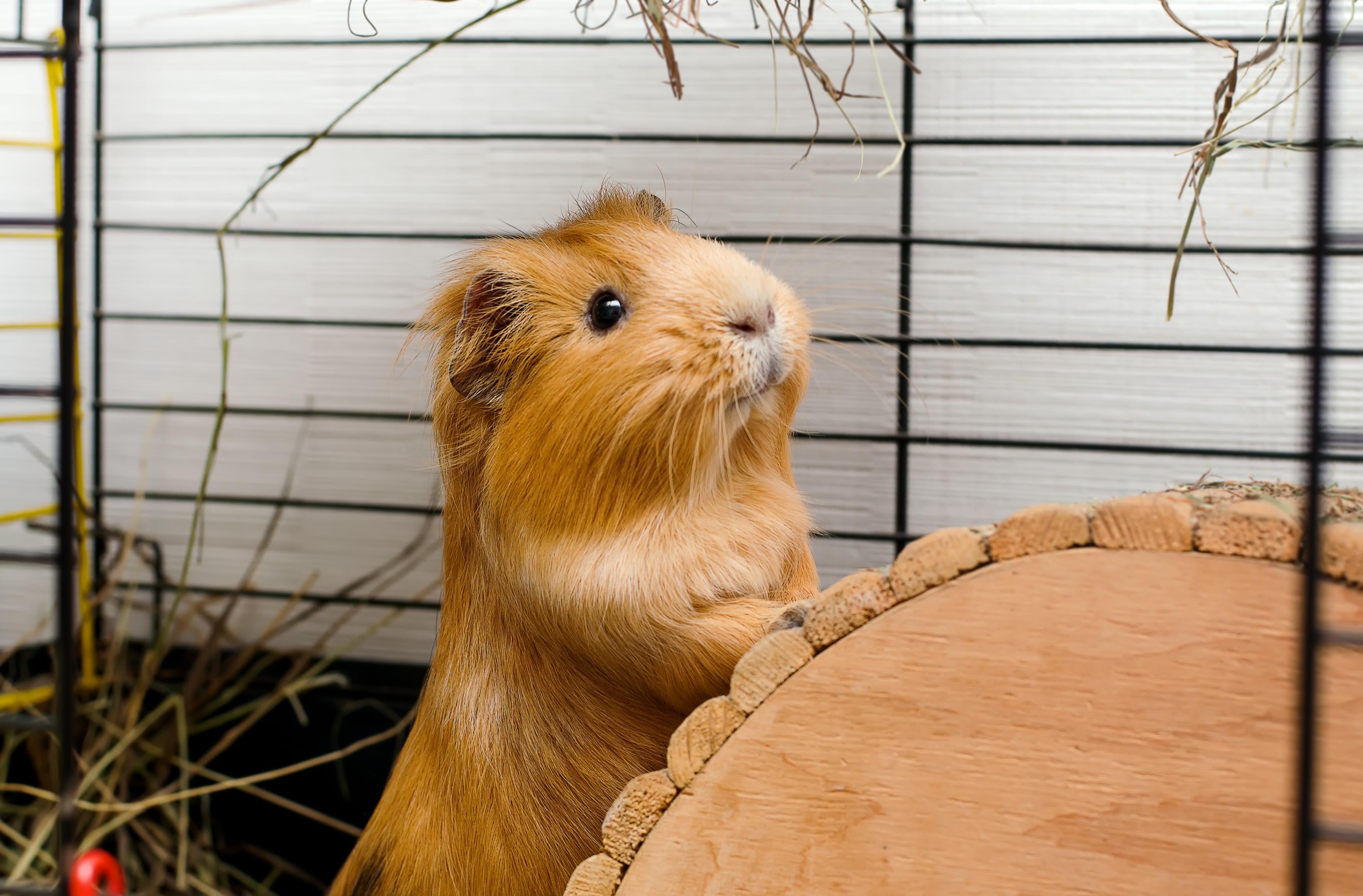 Hamster looking at Black Forest Veterinary Clinic in Colorado Springs, Colorado