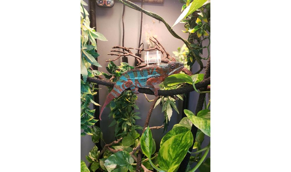 Lizard at Creature Comfort Animal Clinic