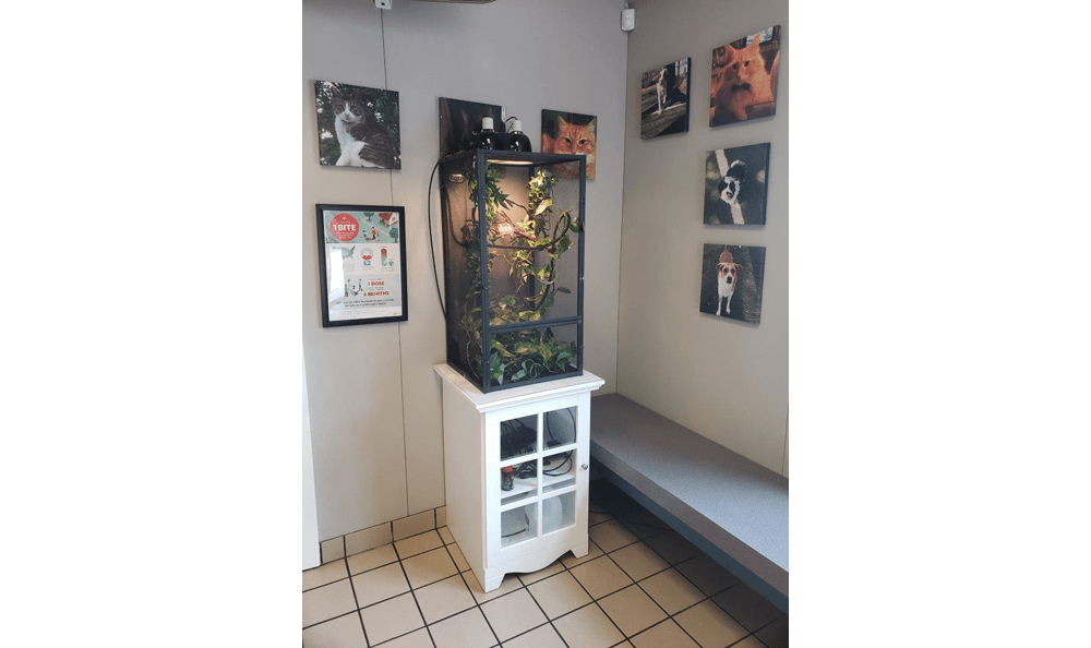 Lizard cage at Creature Comfort Animal Clinic