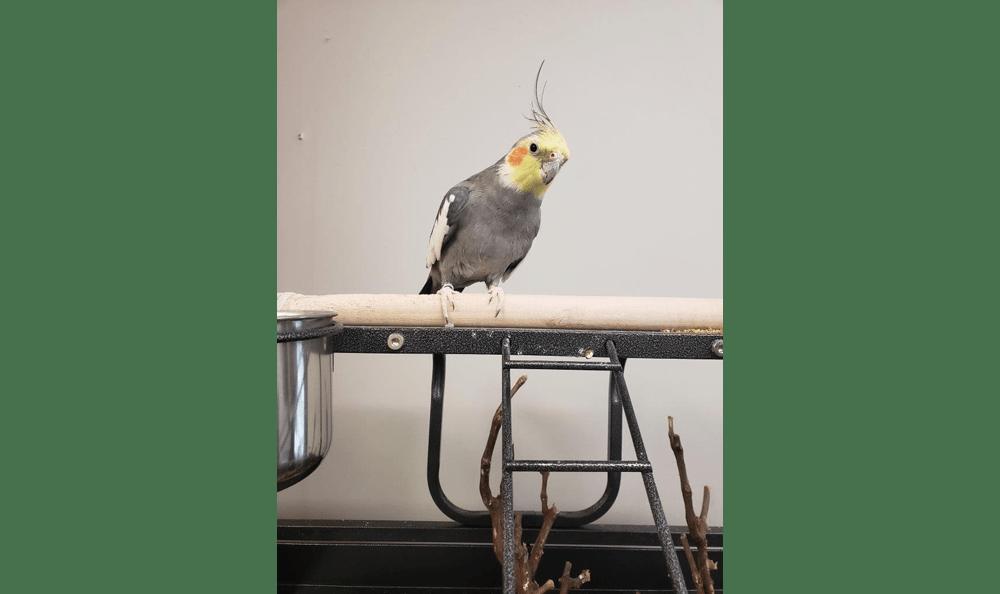 Bird at Creature Comfort Animal Clinic