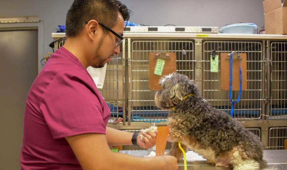 Osiel in action at Creature Comfort Animal Clinic