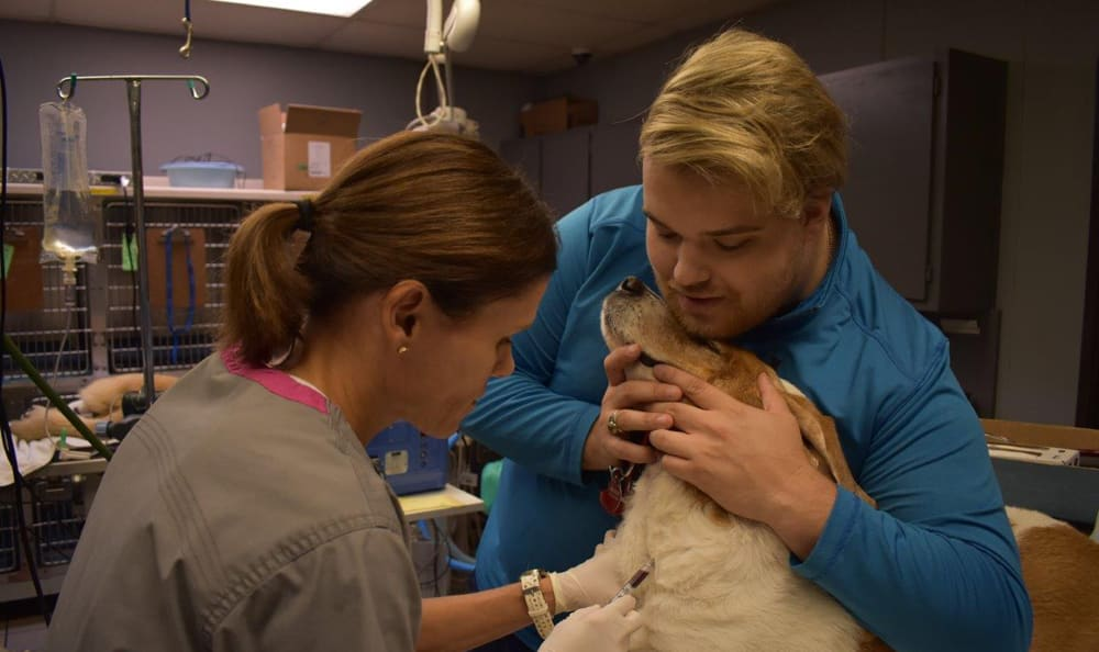 Eric drawing blood at Creature Comfort Animal Clinic