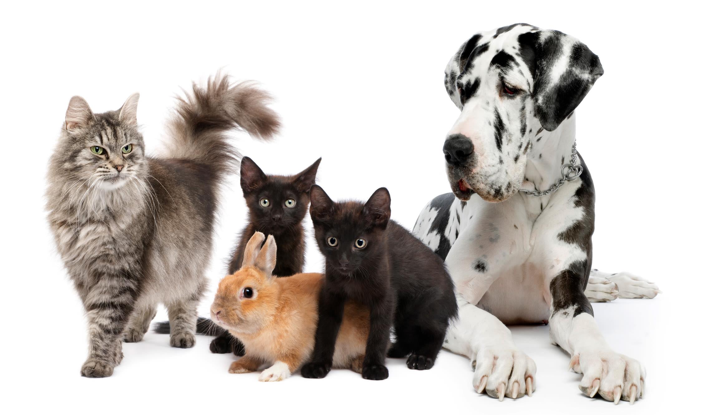 Our precious animals at Black Forest Veterinary Clinic in Colorado Springs, Colorado