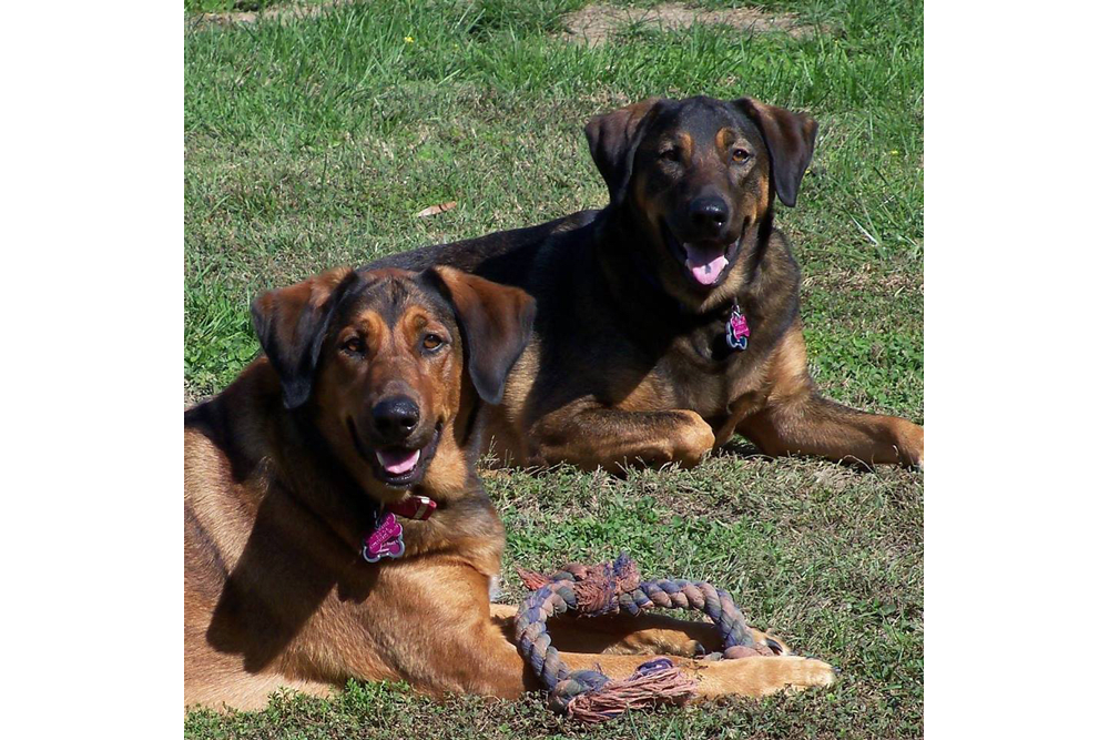Bella & Jake at Farmville animal hospital