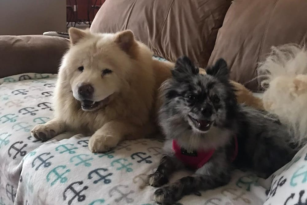 Benny and Miss Ellie Farmville animal hospital