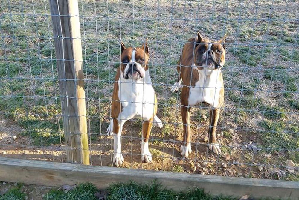 Abbey & Dakota  Farmville animal hospital