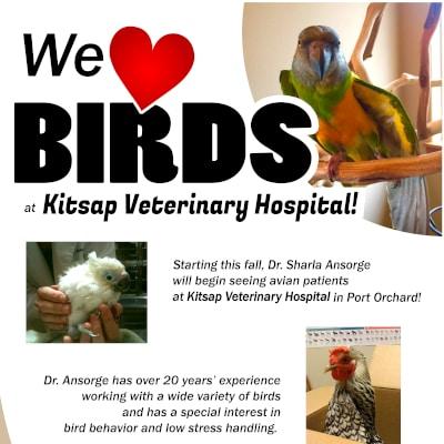 We love birds at Kitsap Veterinary Hospital in Port Orchard, Washington