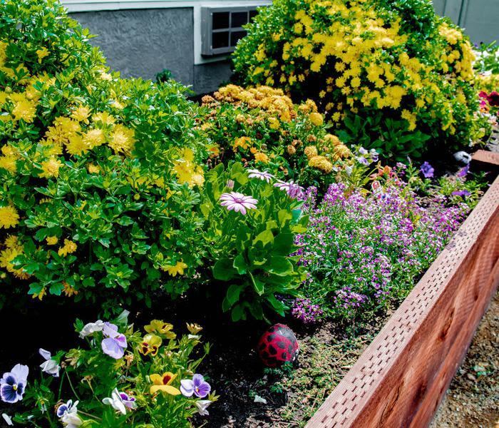Lush gardens at Pacifica Senior Living Vacaville in Vacaville, California