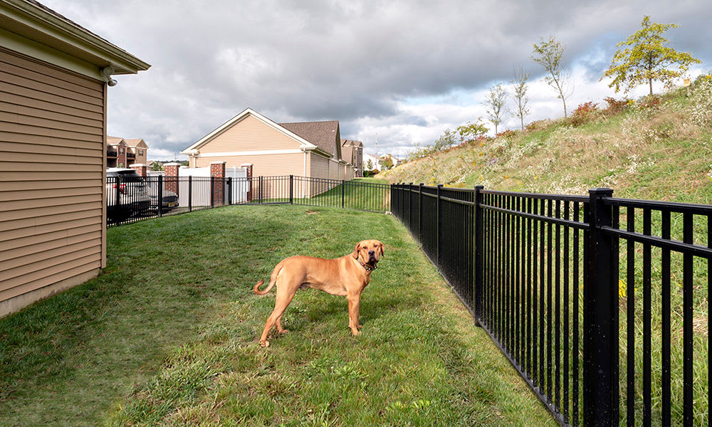 Our apartments in Cranberry Township, Pennsylvania offer a dog park