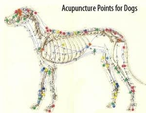 Acupuncture points for dogs at Island Animal Hospital