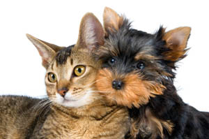 Happy and healthy cat and dog at Angeles Clinic For Animals in Port Angeles, Washington