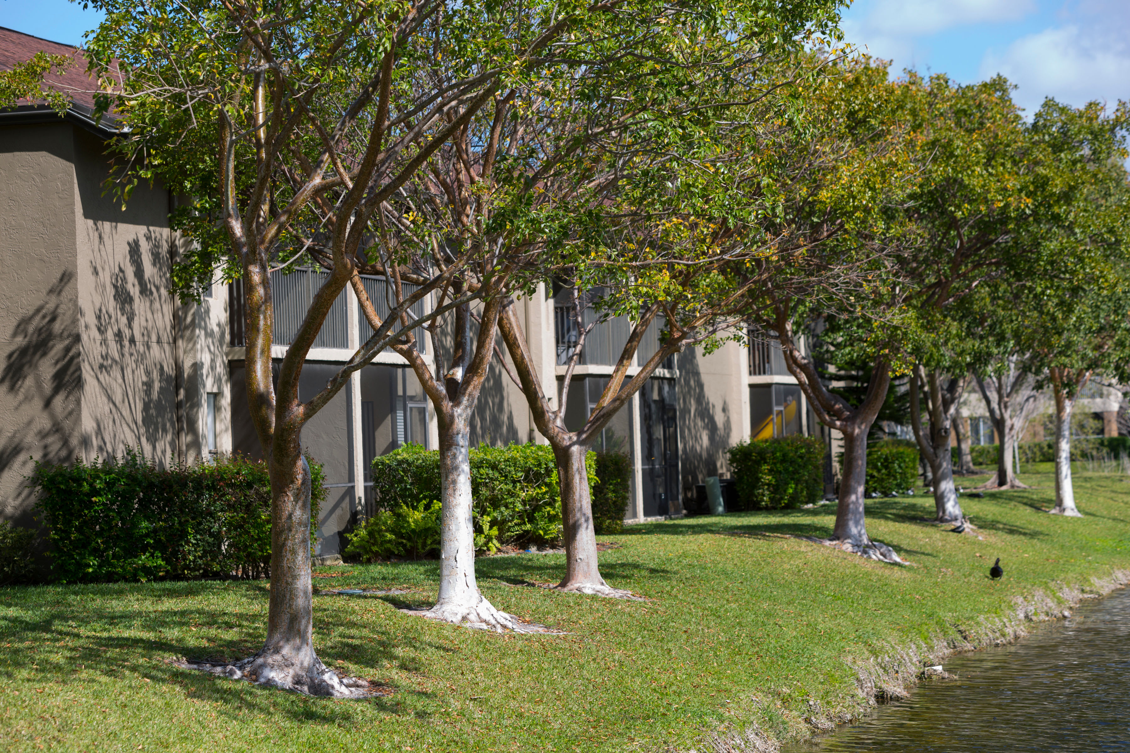 Resident buildings along the shore of our onsite lake at Siena Apartments in Plantation, Florida