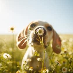Dog smelling the flowers at near Avilla Buffalo Run in Commerce City, Colorado