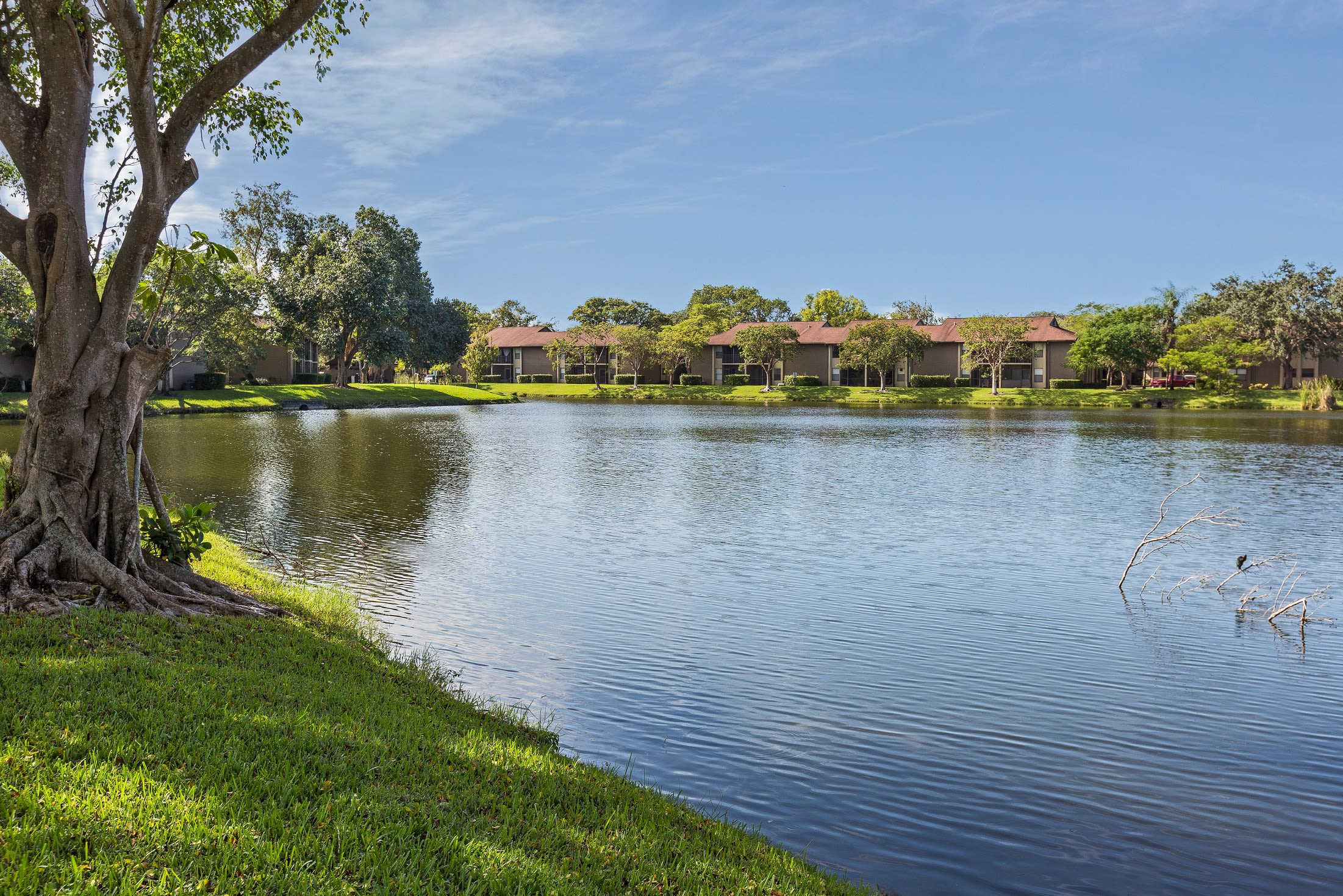 Green grass along the lake outside resident buildings at Siena Apartments in Plantation, Florida