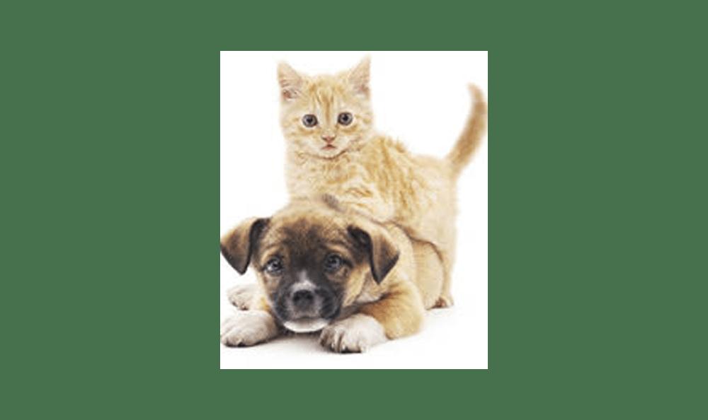 Our Skilled Veterinarians | Riverside Animal Hospital North