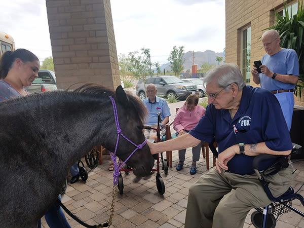 senior man feeding a black pony