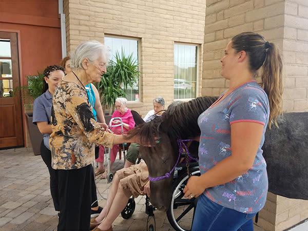 senior resident feeding a pony
