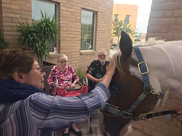 senior woman petting a horse