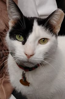 crafty the cat at All Creatures Animal Hospital