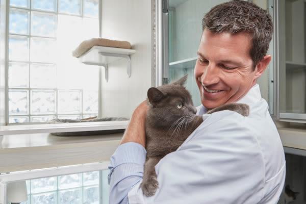 NVA vet holding a cat