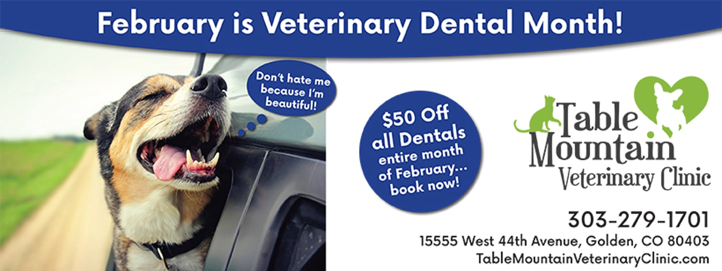 Dental promotion at Table Mountain Veterinary Clinic