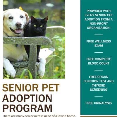 Senior Pet Adoption Program at Kitsap Veterinary Hospital in Port Orchard, Washington