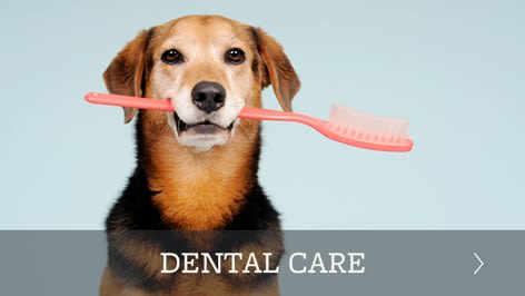 Pet dental care offered in Richmond