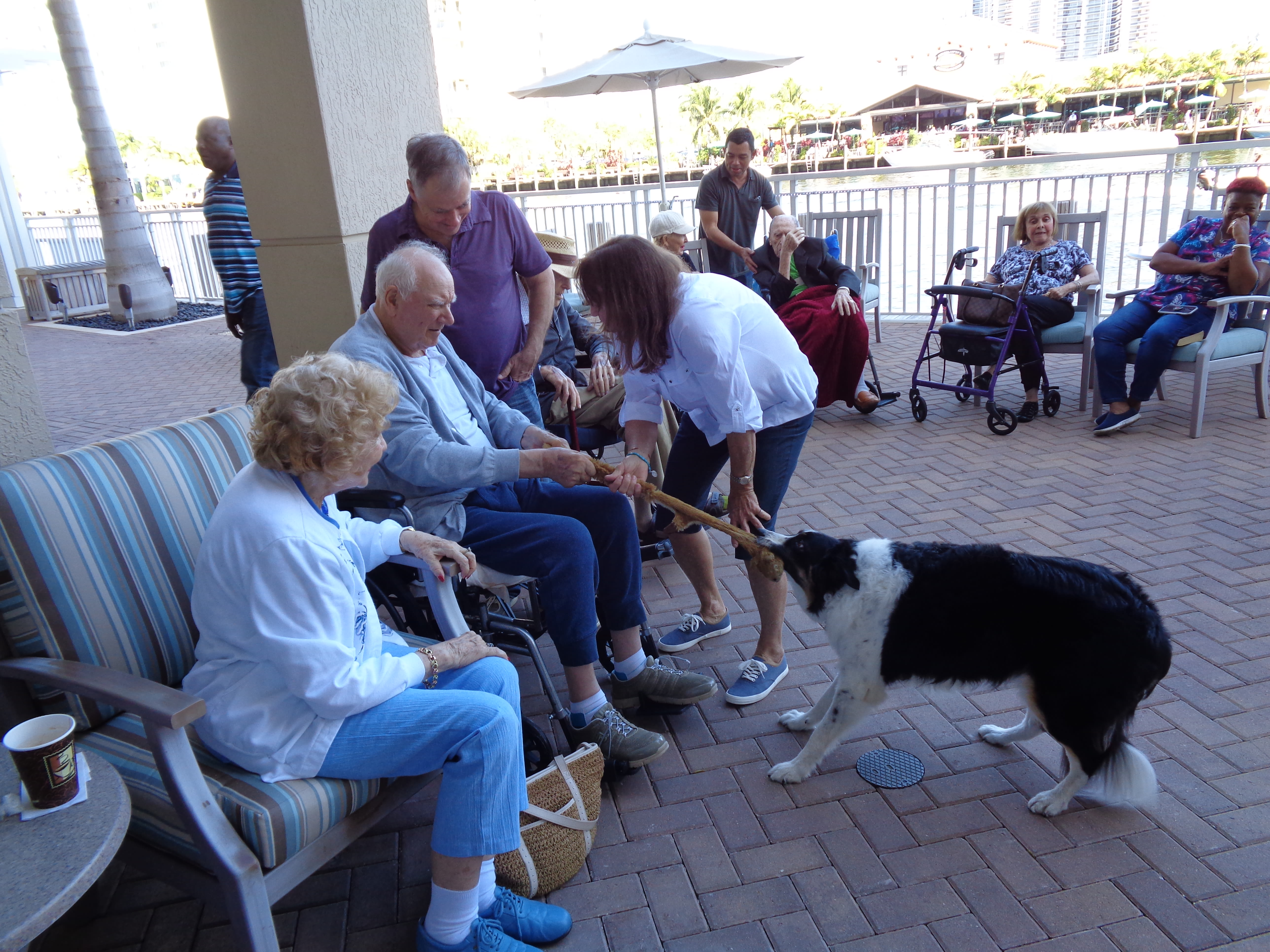 Therapy dog visiting residents at Symphony at the Waterways in Fort Lauderdale, Florida.