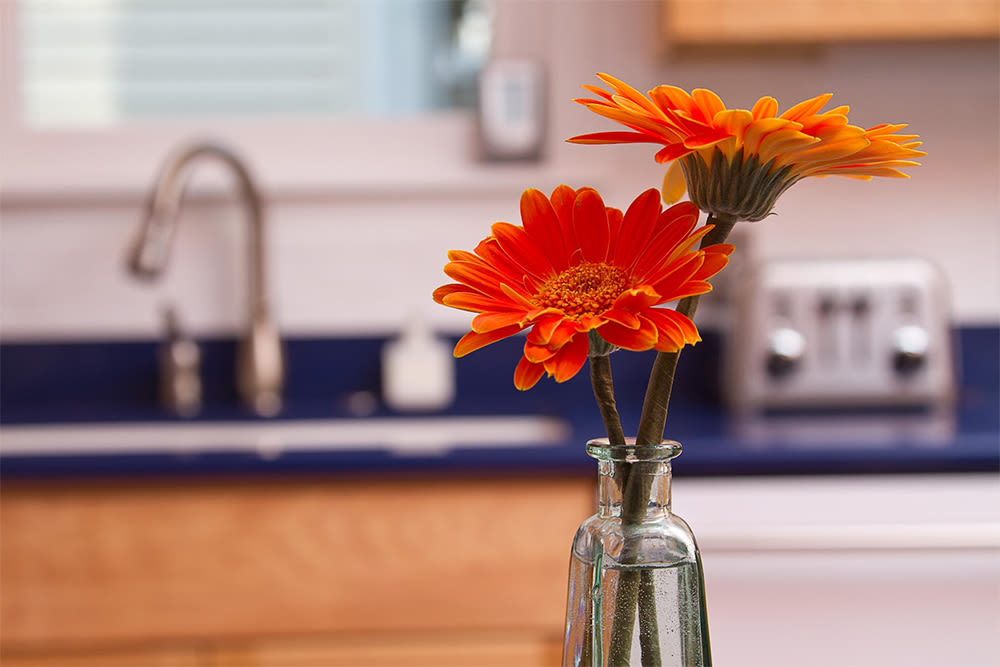 Enjoy apartments with a kitchen at Strathallan House