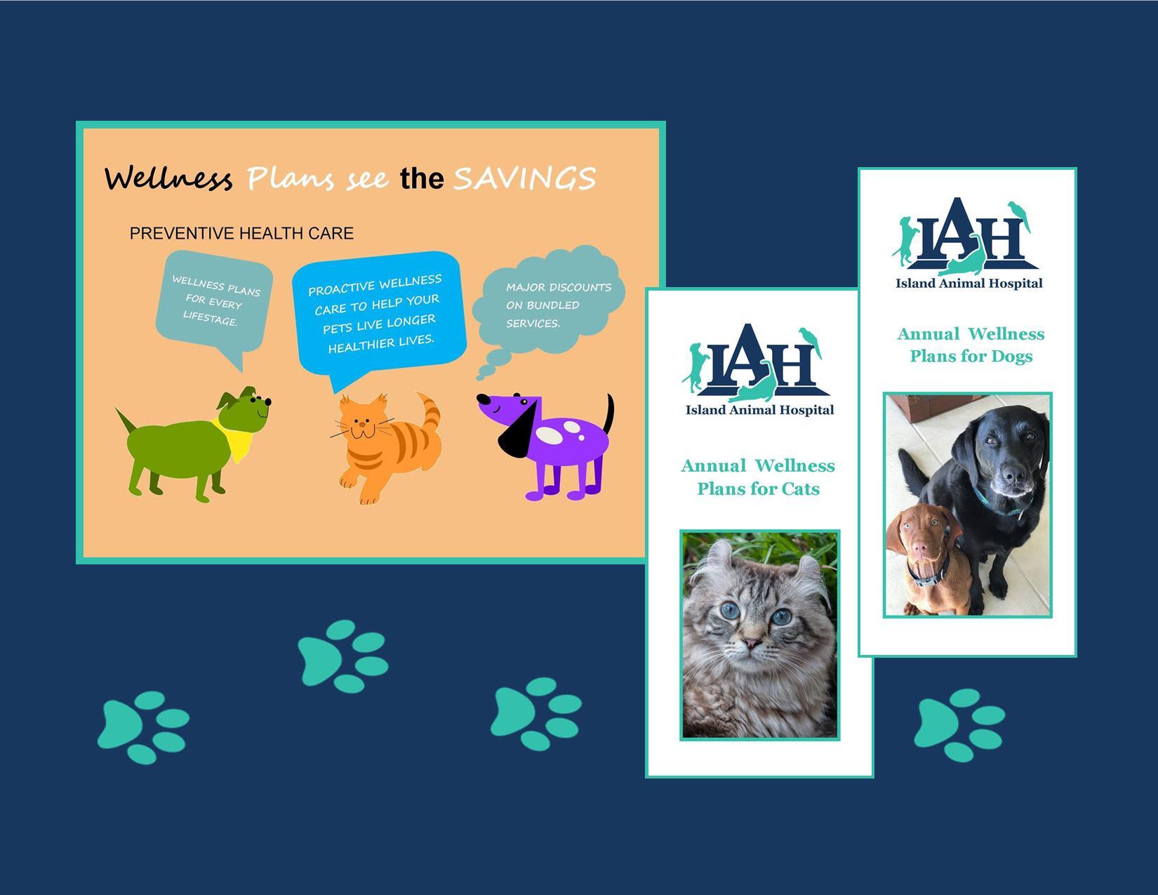 Managing your pet's health at St. Simons Island Animal Hospital