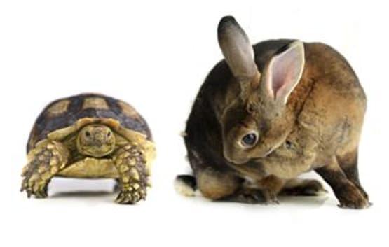 Rabbit and a tortoises