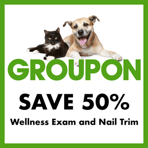 50% off wellness exam and nail trim groupon