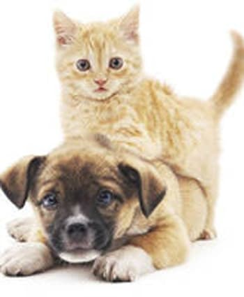 Place holder image of a kitten and puppy