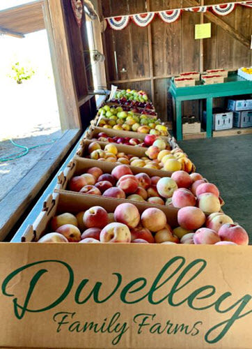 Dwelling Farm Fruits Oakley California